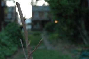 05_01 Peach Leaves